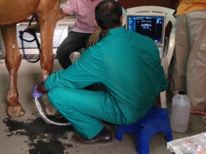 Amr Ultrasound