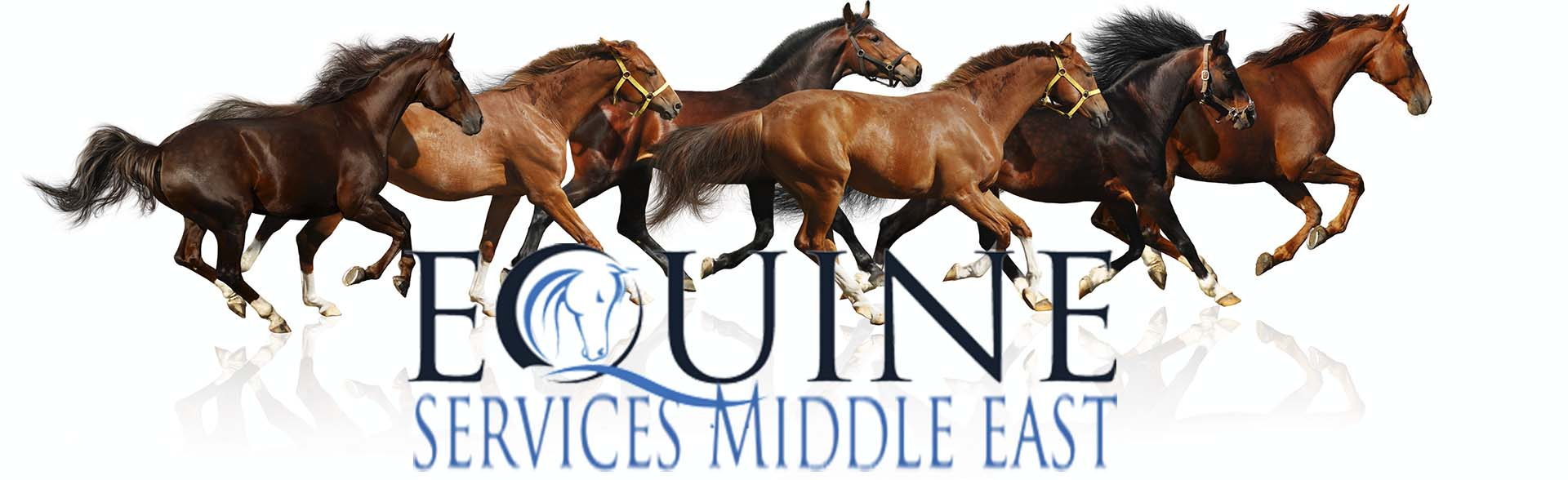 Equine Services Middle East