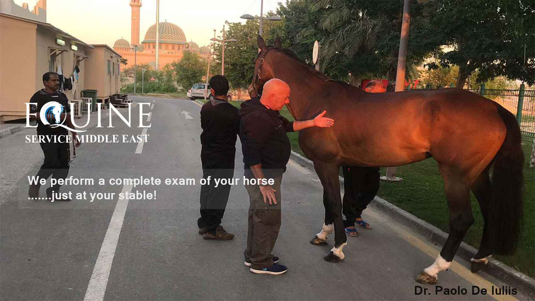 Equine Services Middle East We Perform A Complete Exam